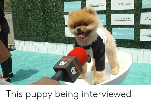 Cancer, Chrysler, and Puppy: Prel a Reporler  CHRYSLER  RIAN  llol  CHRYSLER  THE  AY  OVARIAN CANCER  RESEARCH FUND  CHR This puppy being interviewed