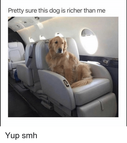 Funny, Smh, and Dog: Pretty sure this dog is richer than me Yup smh