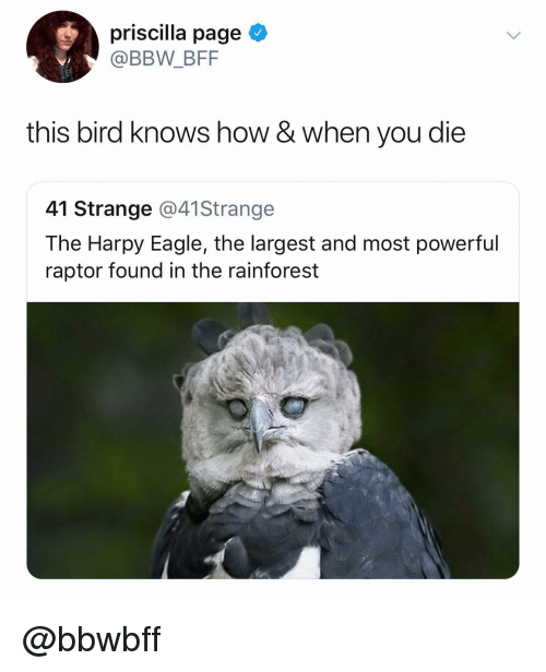 raptor: priscilla page  @BBW_BFF  this bird knows how & when you die  41 Strange @41Strange  The Harpy Eagle, the largest and most powerful  raptor found in the rainforest @bbwbff