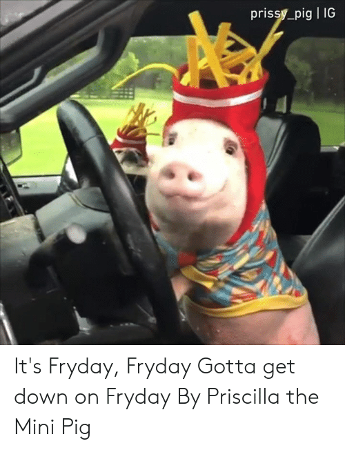 Dank, 🤖, and Mini: prissy_pig IG It's Fryday, Fryday Gotta get down on Fryday  By Priscilla the Mini Pig
