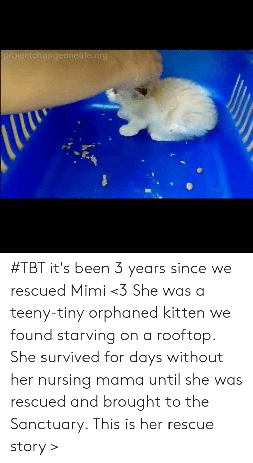 Memes, Tbt, and Nursing: projectchangeonelife.org #TBT it's been 3 years since we rescued Mimi <3 She was a teeny-tiny orphaned kitten we found starving on a rooftop. She survived for days without her nursing mama until she was rescued and brought to the Sanctuary. This is her rescue story >