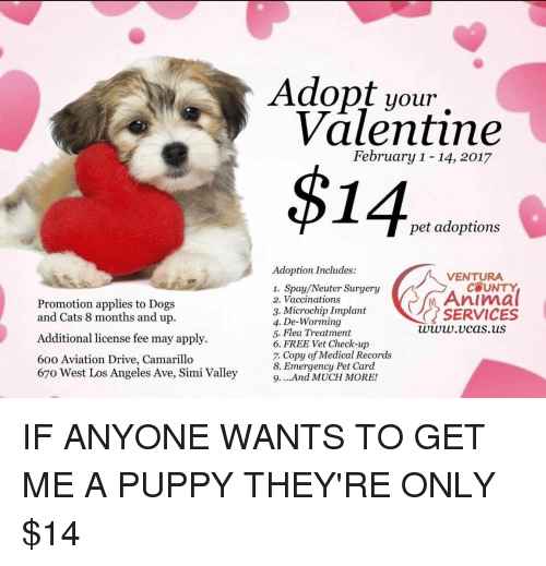 dog-and-cats: Promotion applies to Dogs  and Cats 8 months and up.  Additional license fee may apply.  60o Aviation Drive, Camarillo  67o West Los Angeles Ave, Simi Valley  Adopt your  Valentine  February 1-14, 2017  $14  pet adoptions  Adoption Includes:  VENTURA  1. Spay/Neuter Surgery  Animal  2. Vaccinations  3. Microchip Implant  SERVICES  4. De-Worming  www.v cas.uS  5. Flea Treatment  6. FREE Vet Check-up  7. Copy of Medical Records  8. Emergency Pet Card  9. ...And MUCH MORE! IF ANYONE WANTS TO GET ME A PUPPY THEY'RE ONLY $14