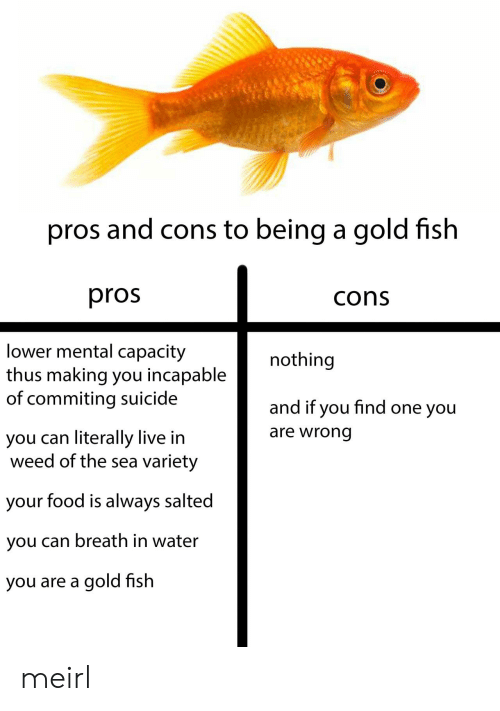 Food, Weed, and Fish: pros and cons to being a gold fish  pros  cons  lower mental capacity  thus making you incapable  of commiting suicide  nothing  and if you find one you  are wrong  you can literally live in  weed of the sea variety  your food is always salted  you can breath in water  you are a gold fish meirl