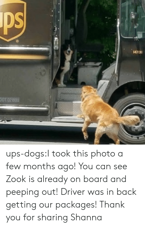 on board: ps  4701  DOT 021800 ups-dogs:I took this photo a few months ago! You can see Zook is already on board and peeping out! Driver was in back getting our packages! Thank you for sharing Shanna