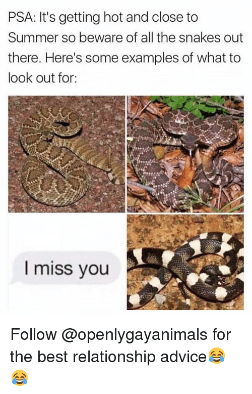 Advice, Funny, and Summer: PSA: It's getting hot and close to  Summer so beware of all the snakes out  there. Here's some examples of what to  look out for:  I miss you Follow @openlygayanimals for the best relationship advice😂😂