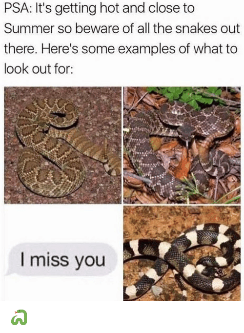 Memes, Summer, and Snakes: PSA: It's getting hot and close to  Summer so beware of all the snakes out  there. Here's some examples of what to  look out for:  l miss you 🐍