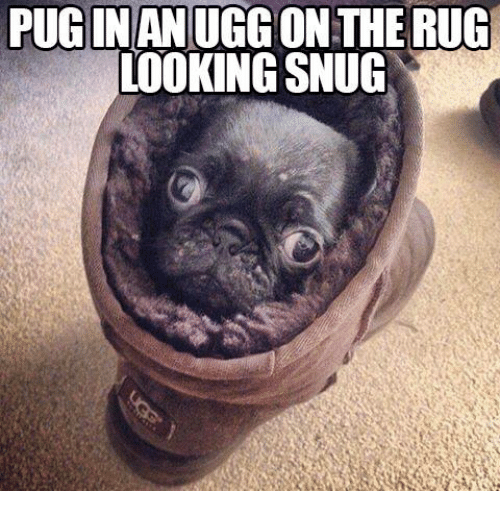 Uggly: PUGINAN UGG ON THE RUG  LOOKING SNUG