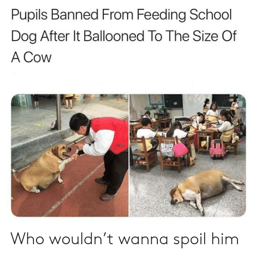 School, Dog, and Cow: Pupils Banned From Feeding School  Dog After It Ballooned To The Size Of  A Cow  EE Who wouldn't wanna spoil him