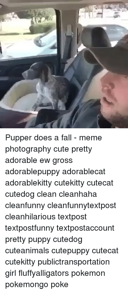 Fall Meme: Pupper does a fall - meme photography cute pretty adorable ew gross adorablepuppy adorablecat adorablekitty cutekitty cutecat cutedog clean cleanhaha cleanfunny cleanfunnytextpost cleanhilarious textpost textpostfunny textpostaccount pretty puppy cutedog cuteanimals cutepuppy cutecat cutekitty publictransportation girl fluffyalligators pokemon pokemongo poke