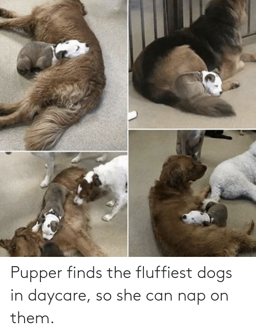 pupper: Pupper finds the fluffiest dogs in daycare, so she can nap on them.