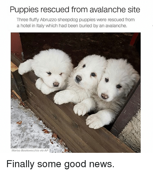 avalanche: Puppies rescued from avalanche site  Three fluffy Abruzzo sheepdog puppies were rescued from  a hotel in Italy which had been buried by an avalanche.  Marisa Basilavecchia via AP Finally some good news.