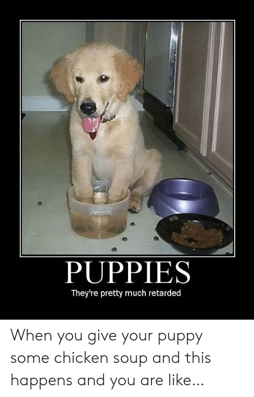 And You Are: PUPPIES  They're pretty much retarded When you give your puppy some chicken soup and this happens and you are like…
