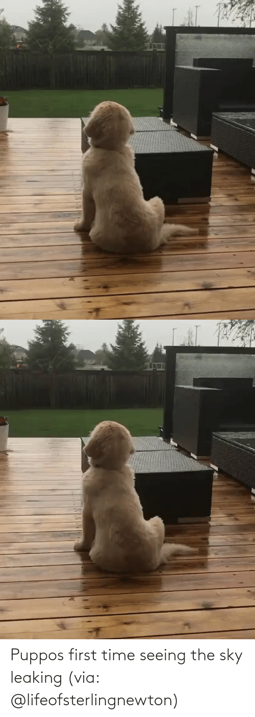 sky: Puppos first time seeing the sky leaking (via: @lifeofsterlingnewton)