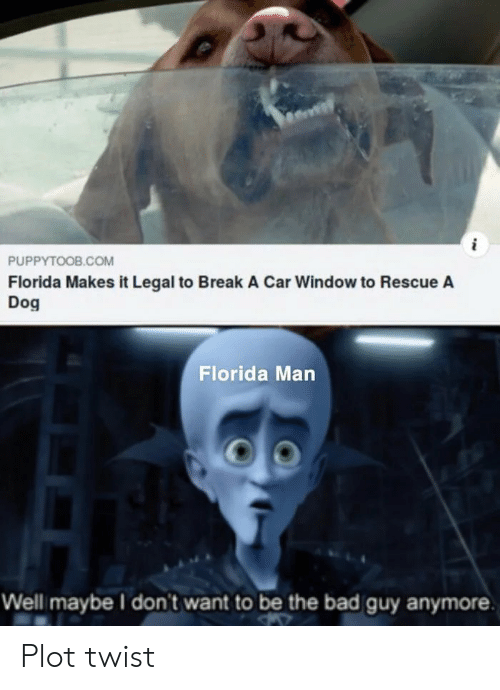 bad guy: PUPPYTOOB.COM  Florida Makes it Legal to Break A Car Window to Rescue A  Dog  Florida Man  Well maybe I don't want to be the bad guy anymore Plot twist