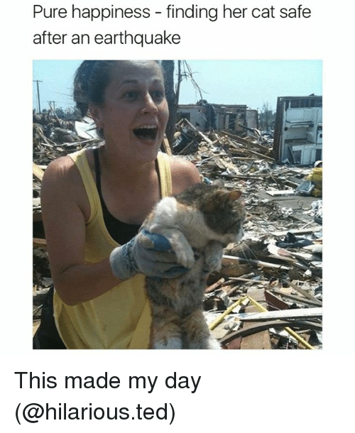 Pure Happiness: Pure happiness - finding her cat safe  after an earthquake This made my day (@hilarious.ted)