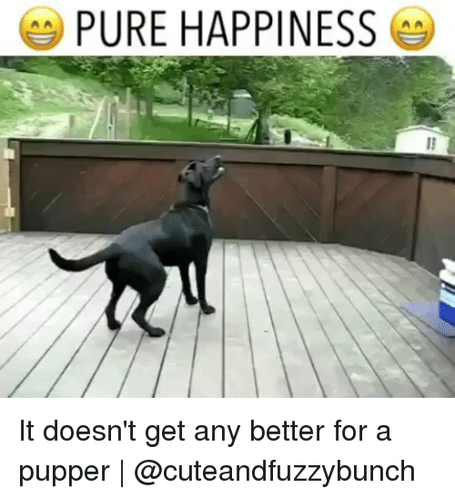Pure Happiness: PURE HAPPINESS It doesn't get any better for a pupper | @cuteandfuzzybunch