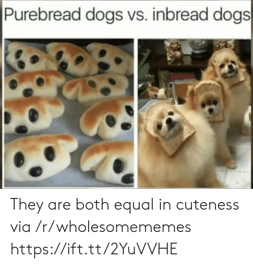 Dogs, Via, and They: Purebread dogs vs. inbread dogs They are both equal in cuteness via /r/wholesomememes https://ift.tt/2YuVVHE