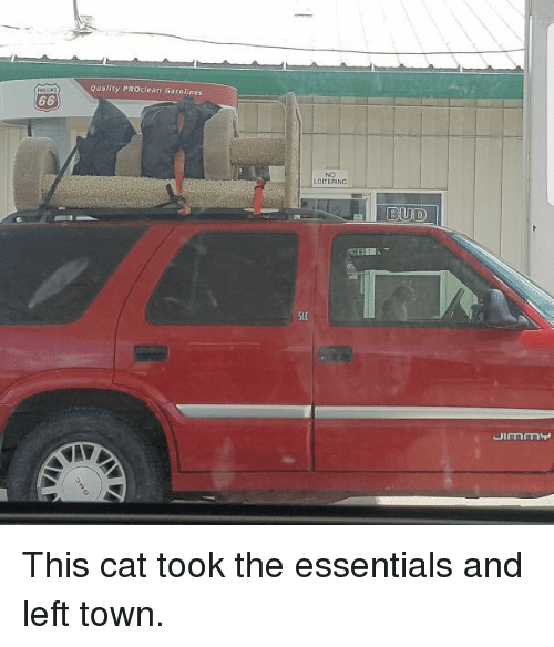 Cat, Essentials, and Sle: Quality PROclean Gasolines  NO  LOITERING  SLE This cat took the essentials and left town.