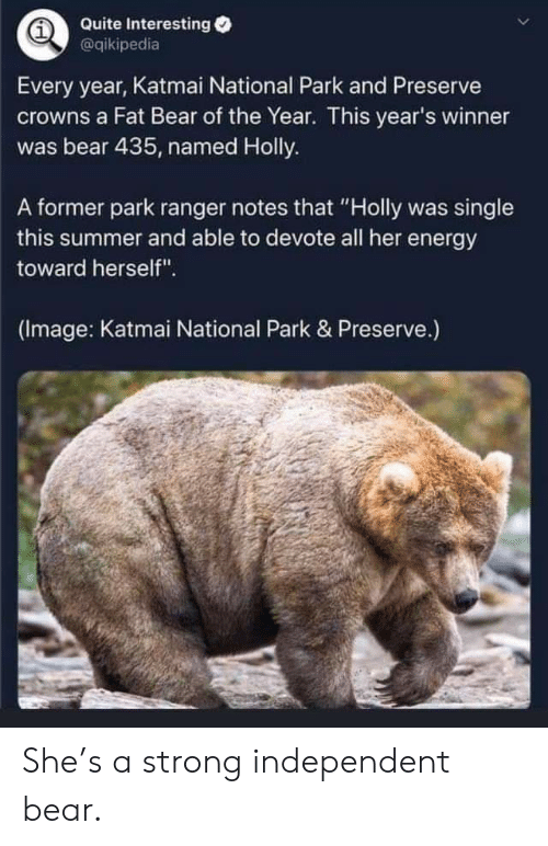 "ranger: Quite Interesting  @qikipedia  Every year, Katmai National Park and Preserve  crowns a Fat Bear of the Year. This year's winner  was bear 435, named Holly.  A former park ranger notes that ""Holly was single  this summer and able to devote all her energy  toward herself"".  (Image: Katmai National Park & Preserve.) She's a strong independent bear."