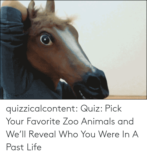 who: quizzicalcontent:    Quiz: Pick Your Favorite Zoo Animals and We'll Reveal Who You Were In A Past Life