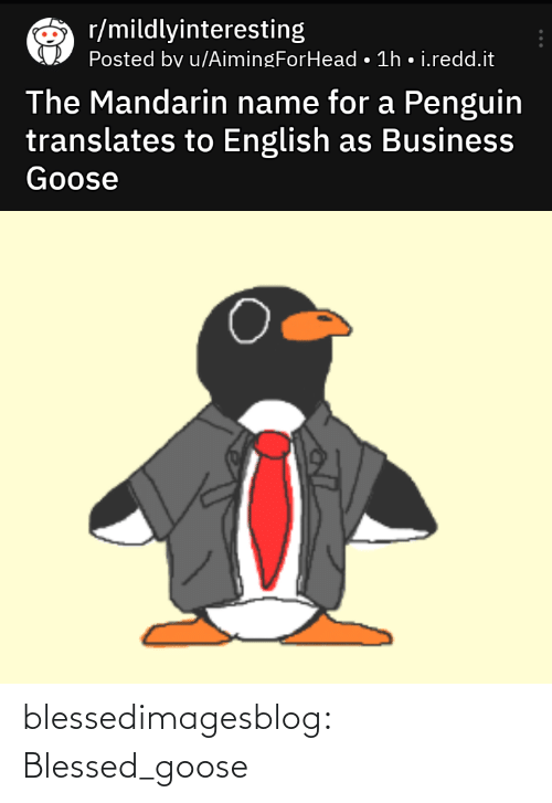 Blessed, Tumblr, and Blog: r/mildlyinteresting  Posted bv u/AimingForHead • 1h • i.redd.it  The Mandarin name for a Penguin  translates to English as Business  Goose blessedimagesblog:  Blessed_goose