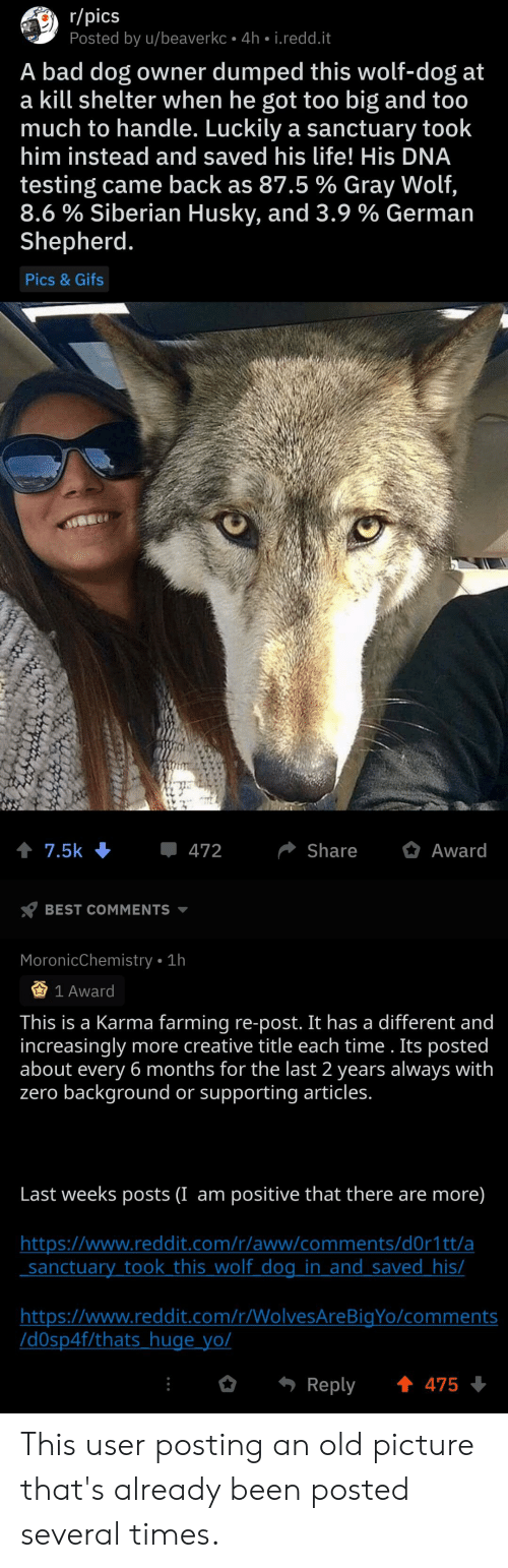 Aww, Bad, and Life: r/pics  Posted by u/beaverkc 4h i.redd.it  A bad dog owner dumped this wolf-dog at  a kill shelter when he got too big and too  much to handle. Luckily a sanctuary took  him instead and saved his life! His DNA  testing came back as 87.5 % Gray Wolf,  8.6% Siberian Husky, and 3.9 % German  Shepherd.  Pics & Gifs  Award  7.5k  472  Share  BEST COMMENTS  MoronicChemistry 1h  1 Award  This is a Karma farming re-post. It has a different and  increasingly more creative title each time . Its posted  about every 6 months for the last 2 years always with  zero background or supporting articles.  Last weeks posts (I am positive that there are more)  http://www.reddit.com/r/aww/comments/d0r1tt/a  sanctuary took this wolf dog in and saved_his/  http:://www.reddit.com/r/WolvesAreBigYo/comments  Idspf/thats huge yo/  t 475  Reply This user posting an old picture that's already been posted several times.