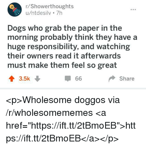 """Dogs, Wholesome, and Responsibility: r/Showerthoughts  u/ntdesilv 7h  Dogs who grab the paper in the  morning probably think they have a  huge responsibility, and watching  their owners read it afterwards  must make them feel so great  3.5k  Share <p>Wholesome doggos via /r/wholesomememes <a href=""""https://ift.tt/2tBmoEB"""">https://ift.tt/2tBmoEB</a></p>"""