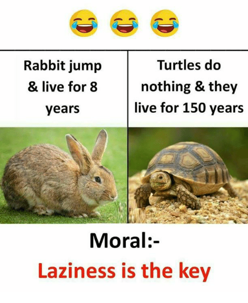 Memes, Live, and Rabbit: Rabbit jump  & live for 8  years  Turtles do  nothing & they  live for 150 years  Moral:-  Laziness is the key