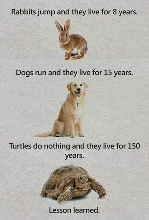 rabbits: Rabbits jump and they live for 8 years.  Dogs run and they live for 15 years.  Turtles do nothing and they live for 150  years.  Lesson learned.