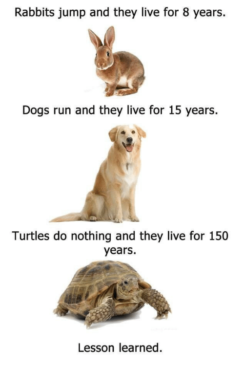 rabbits: Rabbits jump and they live for 8 years.  Dogs run and they live for 15 years  Turtles do nothing and they live for 150  years.  Lesson learned.