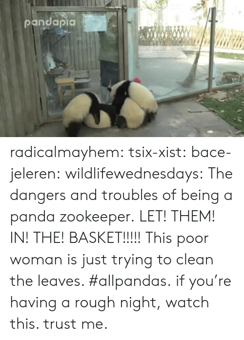 Https Www Facebook Com: radicalmayhem: tsix-xist:  bace-jeleren:  wildlifewednesdays:  The dangers and troubles of being a panda zookeeper.  LET! THEM! IN! THE! BASKET!!!!!  This poor woman is just trying to clean the leaves. #allpandas.  if you're having a rough night, watch this. trust me.