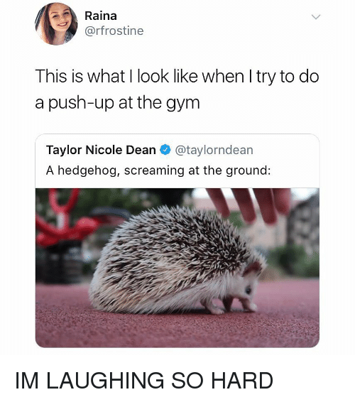 Gym, Hedgehog, and Girl Memes: Raina  @rfrostine  This is what I look like when I try to do  a push-up at the gym  Taylor Nicole Dean @taylorndean  A hedgehog, screaming at the ground: IM LAUGHING SO HARD