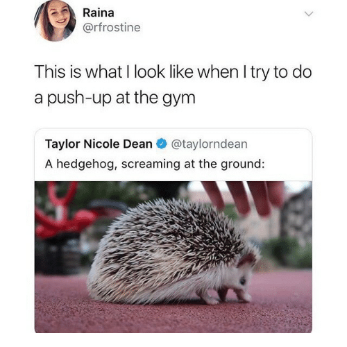 Gym, Hedgehog, and Push: Raina  @rfrostine  This is what I look like when Itry to do  a push-up at the gym  Taylor Nicole Dean @taylorndean  A hedgehog, screaming at the ground: