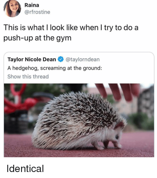Funny, Hedgehog, and Push: Raina  @rfrostine  This is what l look like when l try to do a  push-up at the gynm  Taylor Nicole Dean@taylorndean  A hedgehog, screaming at the ground:  Show this thread Identical