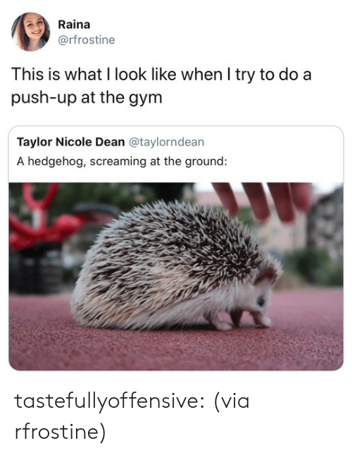 Gym, Target, and Tumblr: Raina  @rfrostine  This is what l look like when l try to do a  push-up at the gym  Taylor Nicole Dean @taylorndean  A hedgehog, screaming at the ground: tastefullyoffensive:  (via rfrostine)