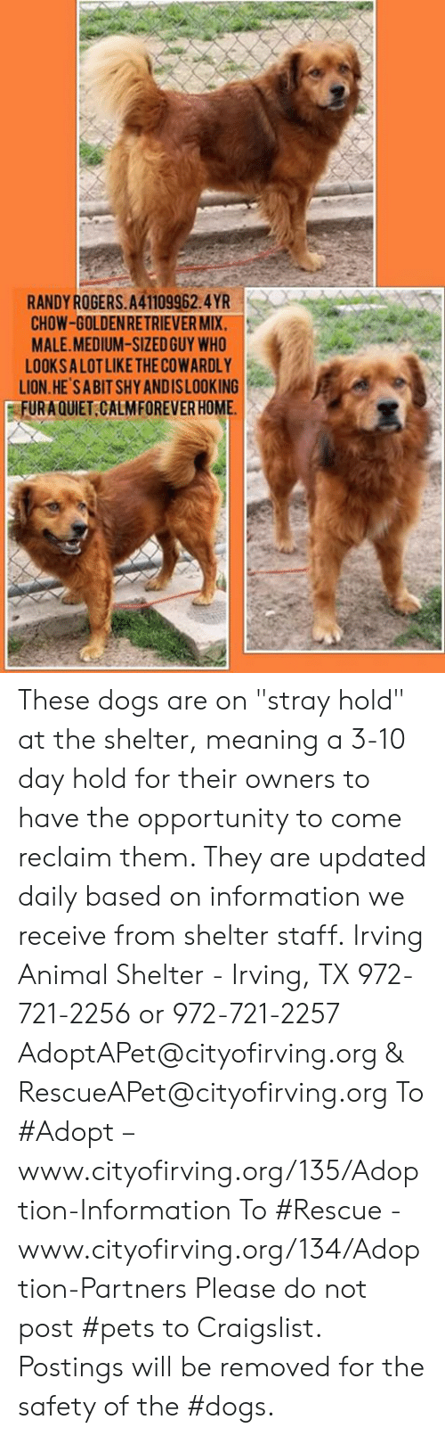 "Craigslist, Dogs, and Memes: RANDYROGERS.A41109962.4YR  CHOW-GOLDENRETRIEVER MIX.  MALE.MEDIUM-SIZED GUY WHO  LOOKSA LOT LIKE THE COWARDLY  LION.HE SABIT SHY ANDISLOOKING  FURAQUIET CALMFOREVER HOME These dogs are on ""stray hold"" at the shelter, meaning a 3-10 day hold for their owners to have the opportunity to come reclaim them. They are updated daily based on information we receive from shelter staff.  Irving Animal Shelter - Irving, TX 972-721-2256 or 972-721-2257 AdoptAPet@cityofirving.org & RescueAPet@cityofirving.org  To #Adopt – www.cityofirving.org/135/Adoption-Information   To #Rescue - www.cityofirving.org/134/Adoption-Partners   Please do not post #pets to Craigslist. Postings will be removed for the safety of the #dogs."
