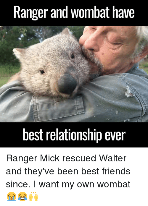 wombats: Ranger and Wombat have  best relationship ever Ranger Mick rescued Walter and they've been best friends since. I want my own wombat 😭😂🙌