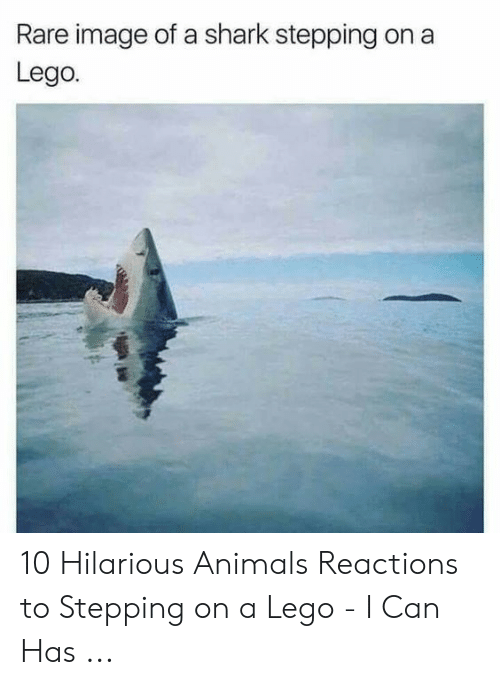 Hilarious Animals: Rare image of a shark stepping on a  Lego. 10 Hilarious Animals Reactions to Stepping on a Lego - I Can Has ...