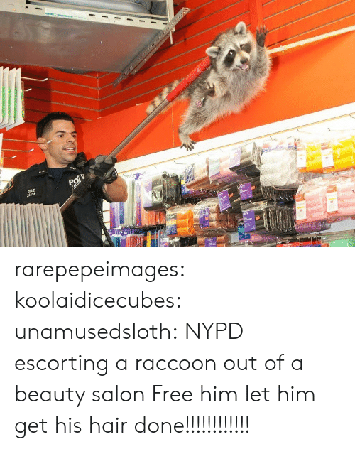 Free Him: rarepepeimages: koolaidicecubes:  unamusedsloth:  NYPD escorting a raccoon out of a beauty salon  Free him  let him get his hair done!!!!!!!!!!!!