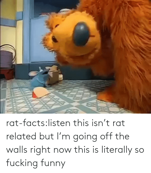 Facts: rat-facts:listen this isn't rat related but I'm going off the walls right now this is literally so fucking funny
