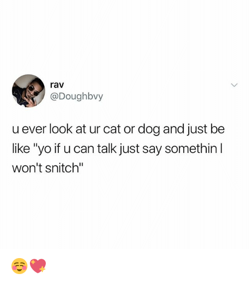 """cat-or-dog: rav  @Doughbvy  u ever look at ur cat or dog and just be  like """"yo if u can talk just say somethin  won't snitch"""" ☺️💖"""