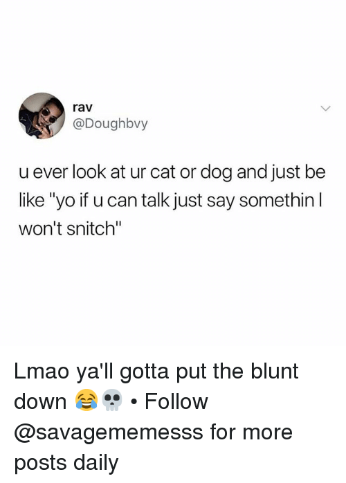 """cat-or-dog: rav  @Doughbvy  u ever look at ur cat or dog and just be  like """"yo if u can talk just say somethin l  won't snitch"""" Lmao ya'll gotta put the blunt down 😂💀 • Follow @savagememesss for more posts daily"""