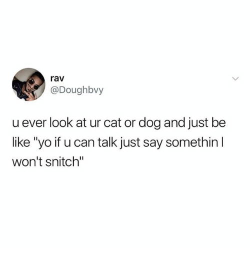 """cat-or-dog: rav  @Doughbvy  u ever look at ur cat or dog and just be  like """"yo if u can talk just say somethin l  won't snitch"""""""
