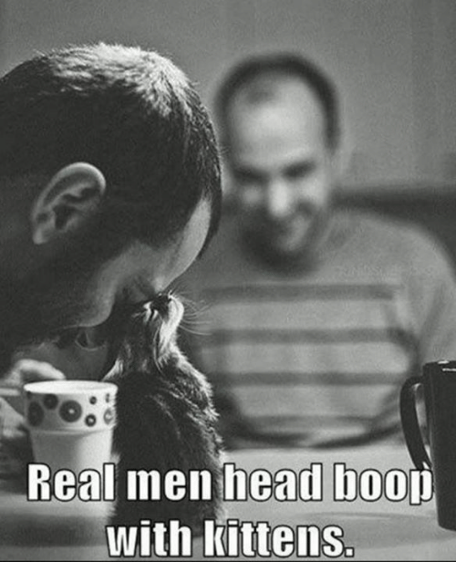 Head, Memes, and Kittens: Real men head boou  with Kittens.