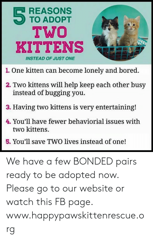 Bored, Memes, and Help: REASONS  TO ADOPT  TWO  KITTENS  INSTEAD OF JUST ONE  1. One kitten can become lonely and bored.  2. Two kittens will help keep each other busy  instead of bugging you.  3. Having two kittens is very entertaining!  4. You'll h  ave fewer behaviorial issues with  two kittens.  5. You'll save TWO lives instead of one! We have a few BONDED pairs ready to be adopted now. Please go to our website or watch this FB page.  www.happypawskittenrescue.org