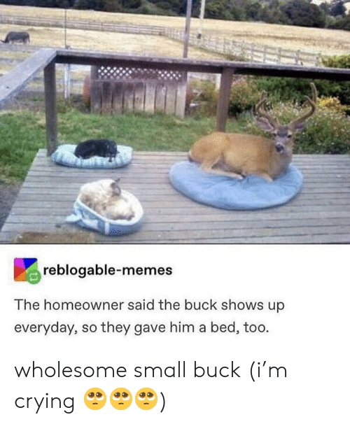 Crying, Memes, and Wholesome: reblogable-memes  The homeowner said the buck shows up  everyday, so they gave him a bed, too. wholesome small buck (i'm crying 🥺🥺🥺)