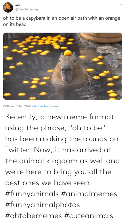 "Have Seen: Recently, a new meme format using the phrase, ""oh to be"" has been making the rounds on Twitter. Now, it has arrived at the animal kingdom as well and we're here to bring you all the best ones we have seen. #funnyanimals #animalmemes #funnyanimalphotos #ohtobememes #cuteanimals"