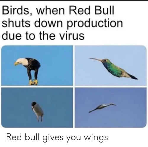 Wings: Red bull gives you wings
