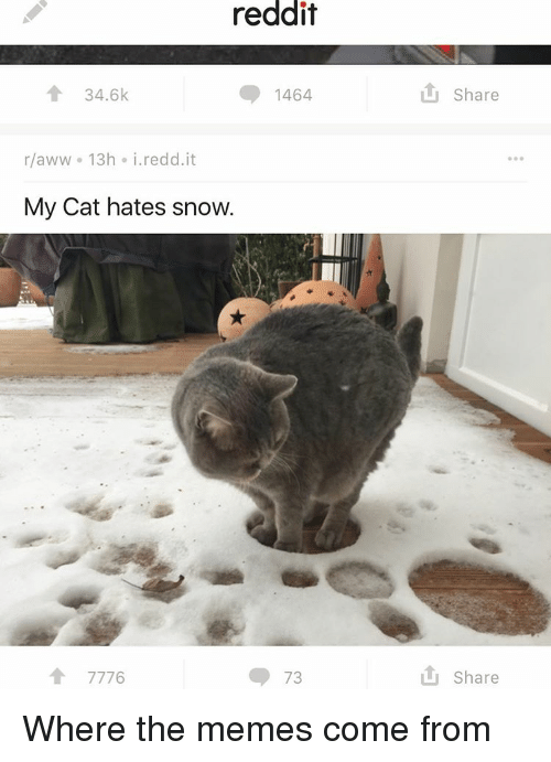 Aww, Memes, and Reddit: reddit  34.6k  1464  r aww 13h i. redd it  My Cat hates snow.  A 7776  73  Share  Share Where the memes come from