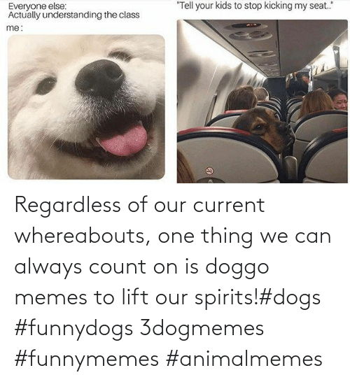 Current: Regardless of our current whereabouts, one thing we can always count on is doggo memes to lift our spirits!#dogs #funnydogs 3dogmemes #funnymemes #animalmemes
